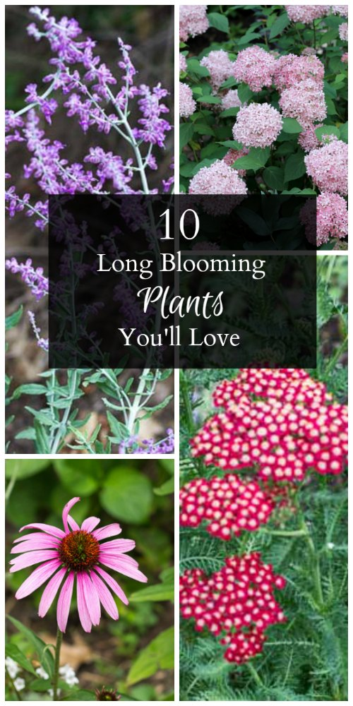 10-long-blooming-plants