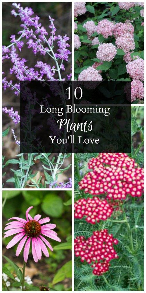 10-long-blooming-plants