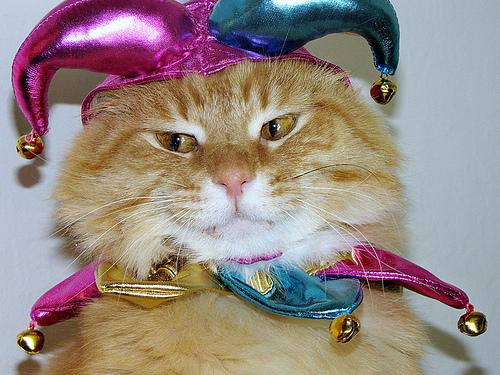 10476833633_431267dc8b_cat-costume