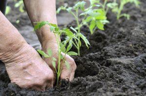 1435255458_Gardening