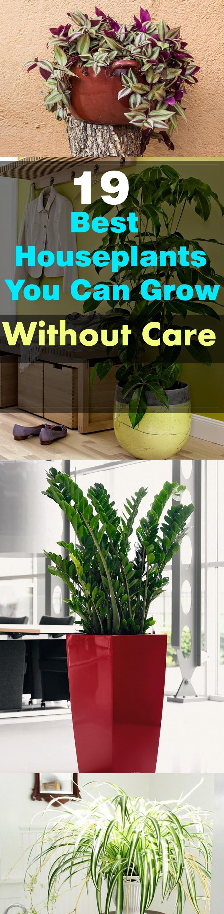 19 best houseplants that grow without care
