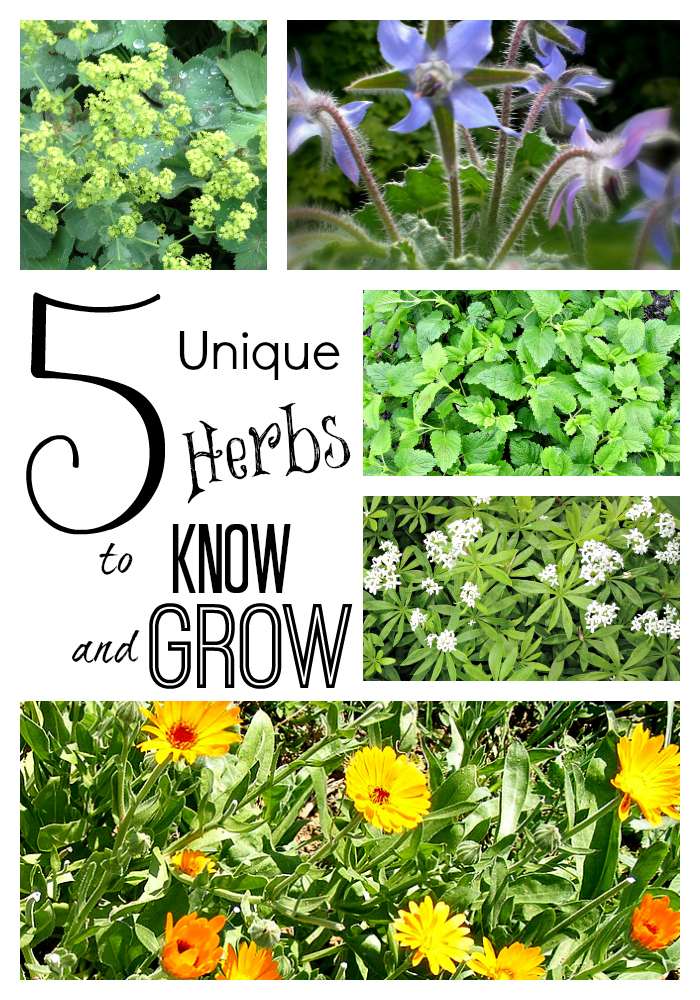 5 herbs to know & grow tall
