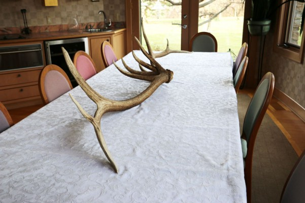 elk antler wildlife tablescape
