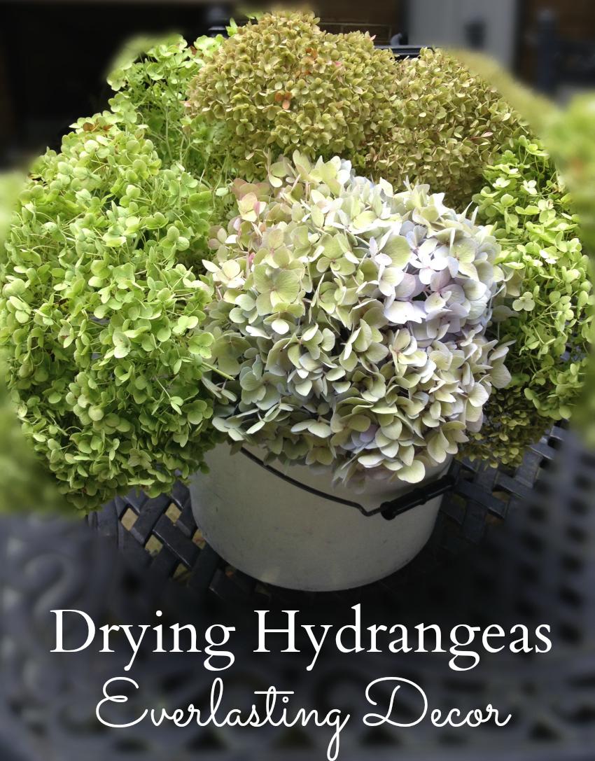 Drying Hydrangeas ~ gardenmatter.com
