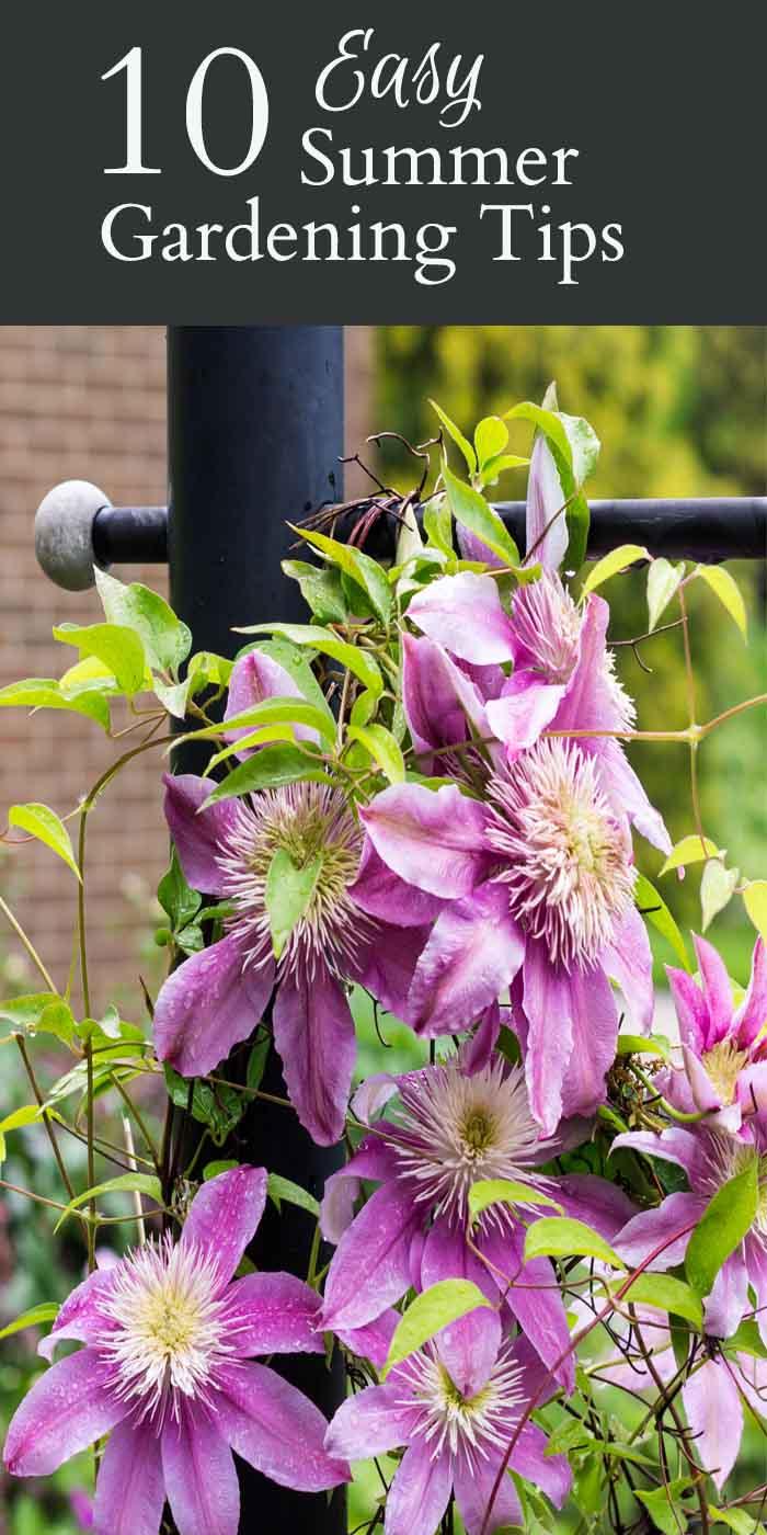 Easy Summer Gardening Tips ~ gardenmatter