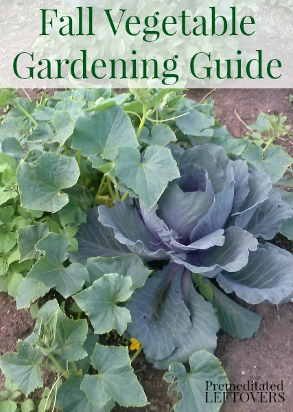 Fall-Vegetable-Gardening-Guide-a-list-of-vegetables-to-grow-in-your-garden-this-fall