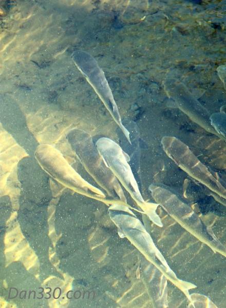 FishShadows