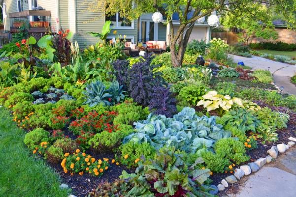 Front Lawn Vegetable Garden – Dan330