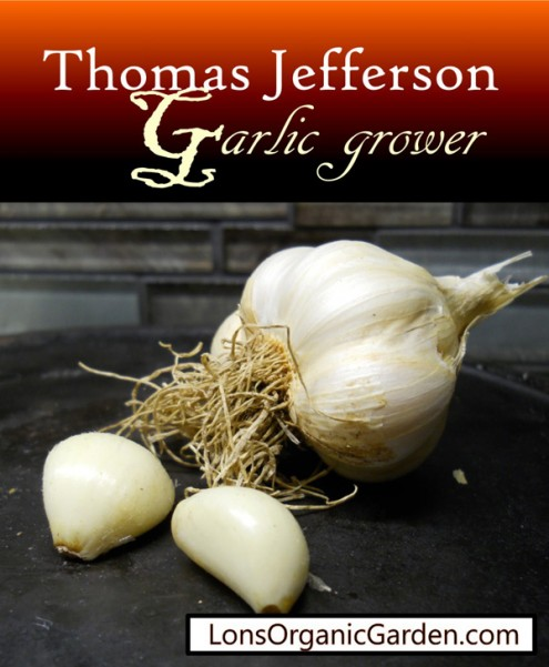 Garlic_Thomas Jefferson