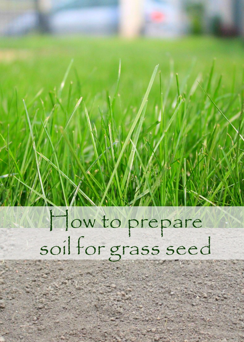 How-to-prepare-soil-for-grass-seed