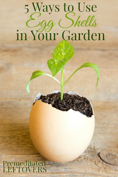 How-to-use-egg-shells-in-your-garden-5-ways-to-use-egg-shells-in-your-garden