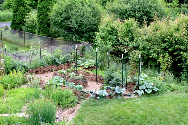 This is the straw bale garden on June 19.