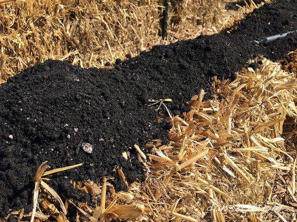 how to seed a straw bale garden