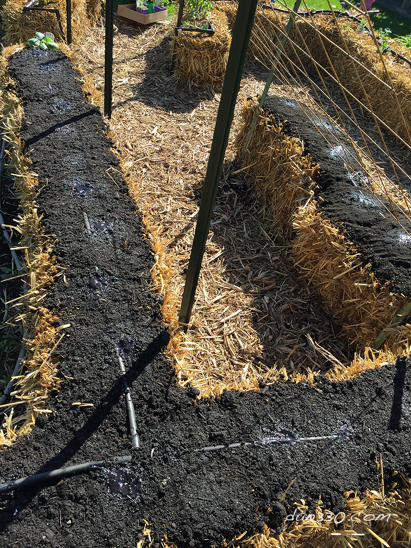 How to Seed a Straw Bale Garden – Dan330