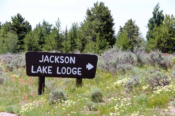 jackson lake lodge sign