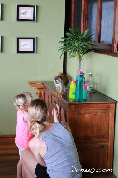 squirrel monkey in house