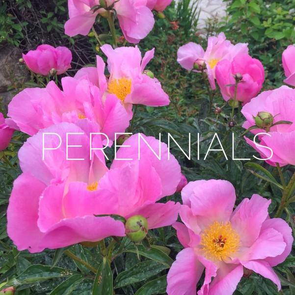 perennial gardening