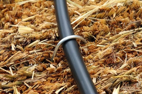 straw bale garden   irrigation