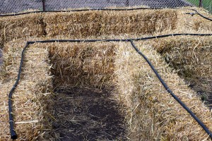 straw bale garden | irrigation
