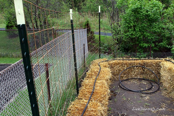 Building A Trellis For Straw Bale Gardening Tomatoes Dan330