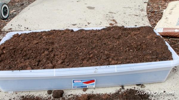 soil in tub ginger