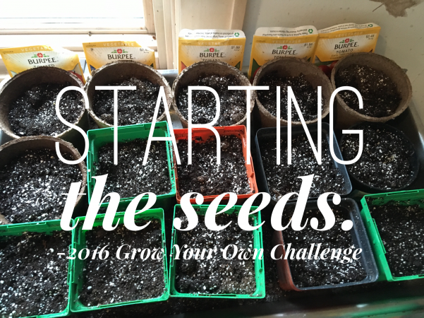starting the seeds