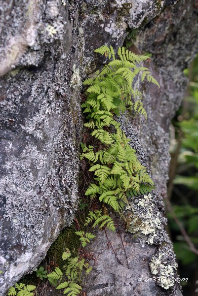 ferns in rock crack