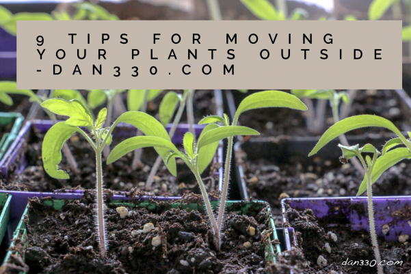 9 tips for moving your plants outside