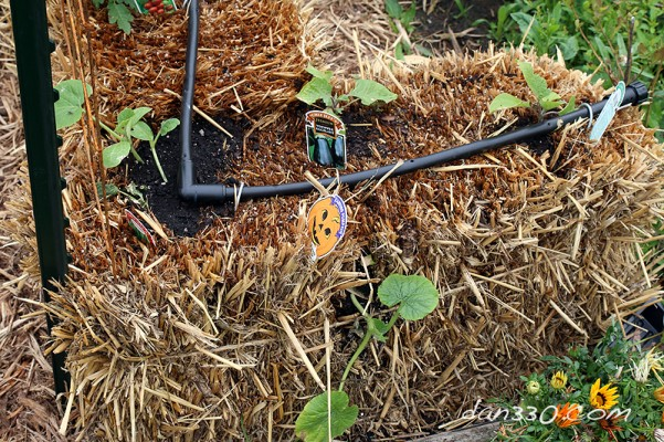 straw bale garden planting