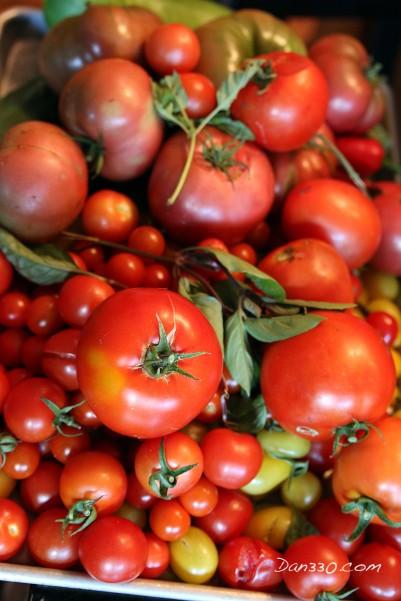 straw bale garden tomatoes