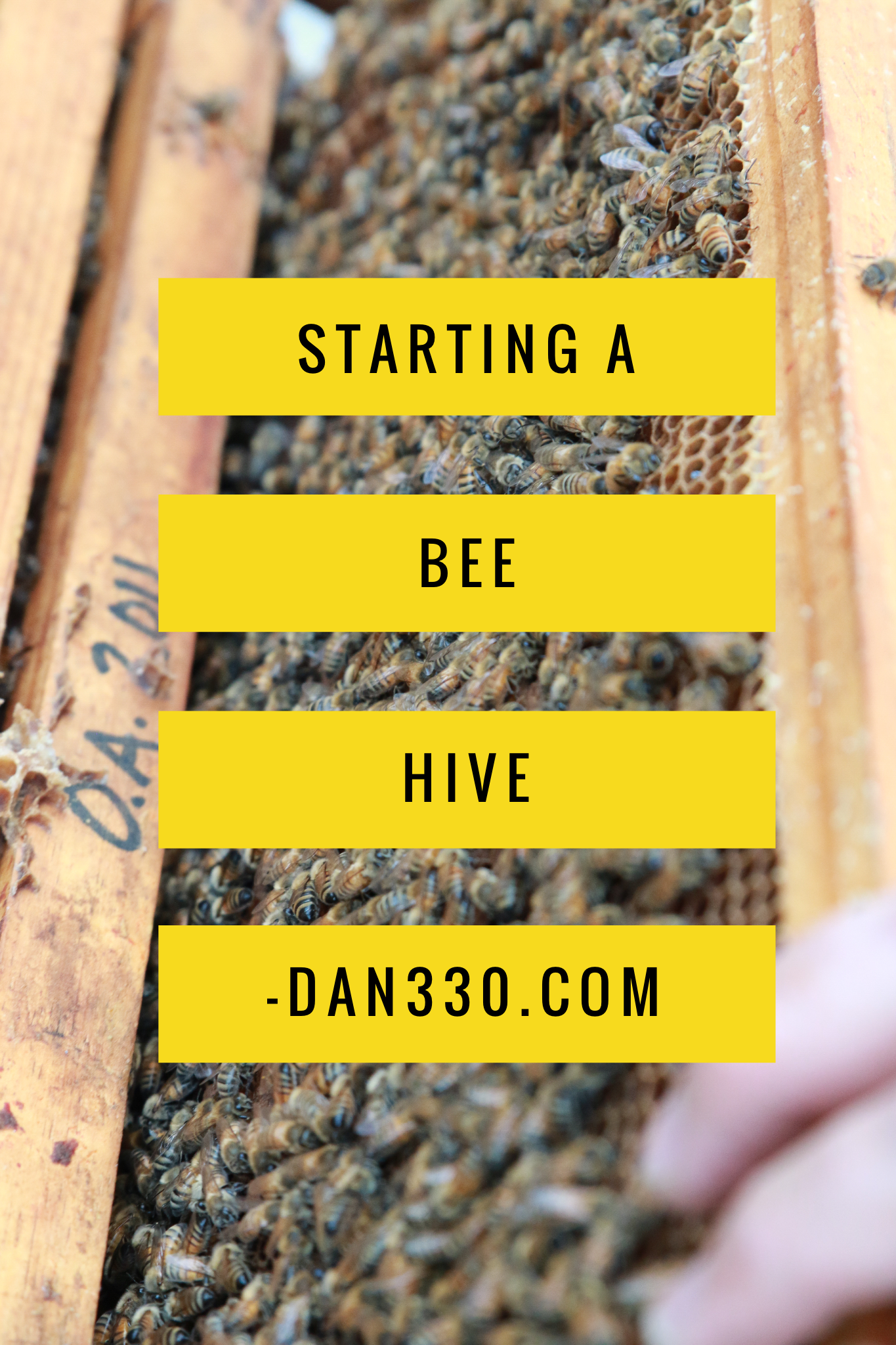 starting a bee hive