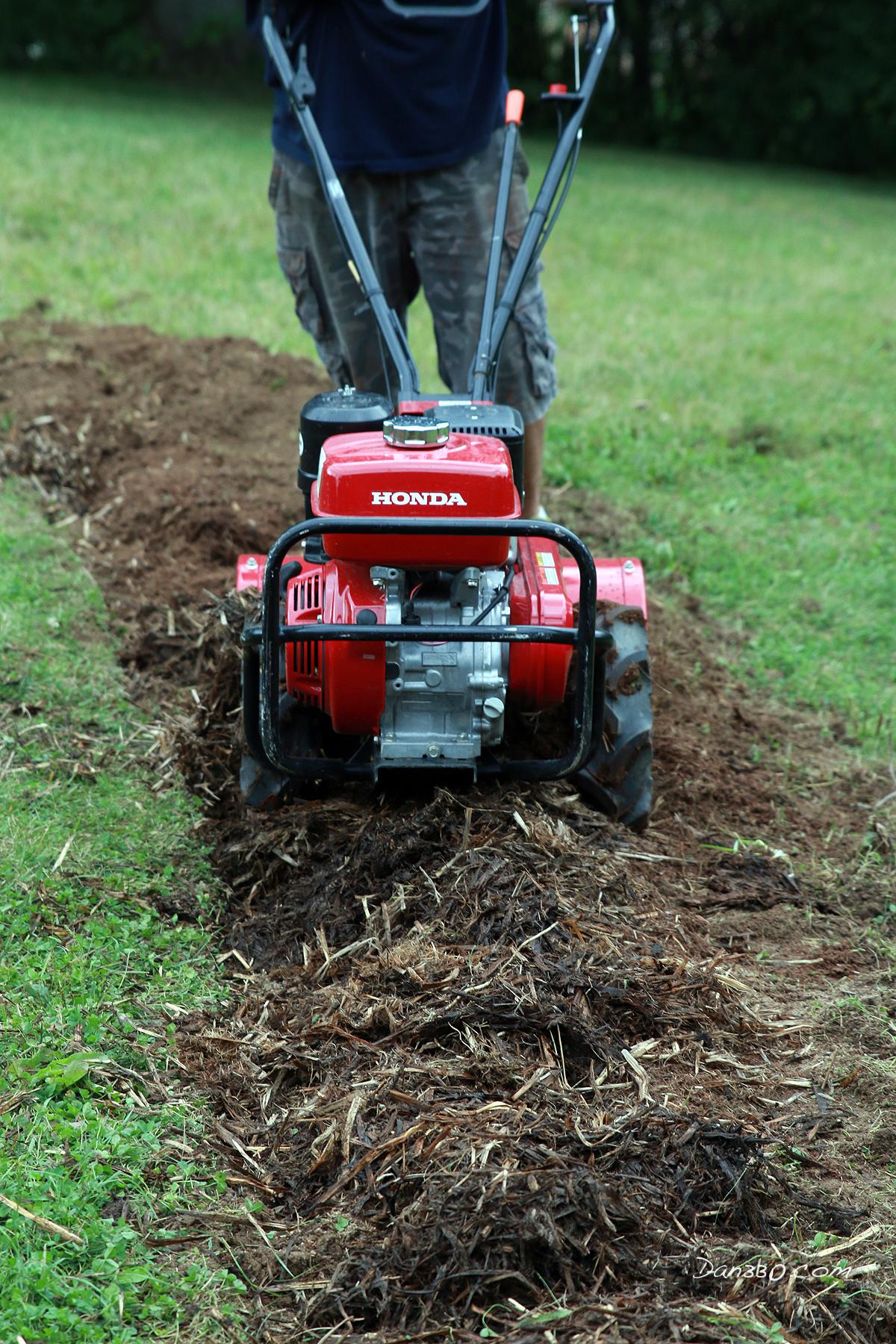tilling soil for blueberry bush