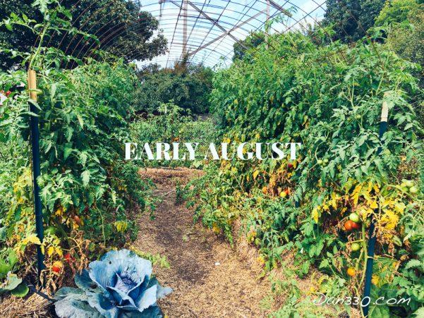august tomato