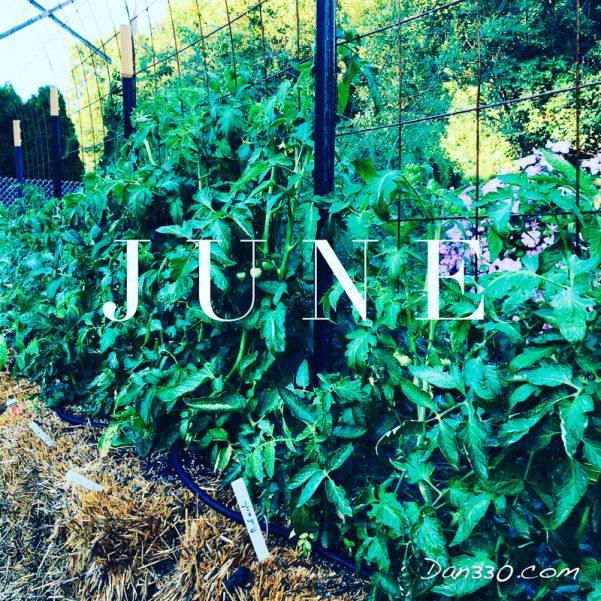 june tomato