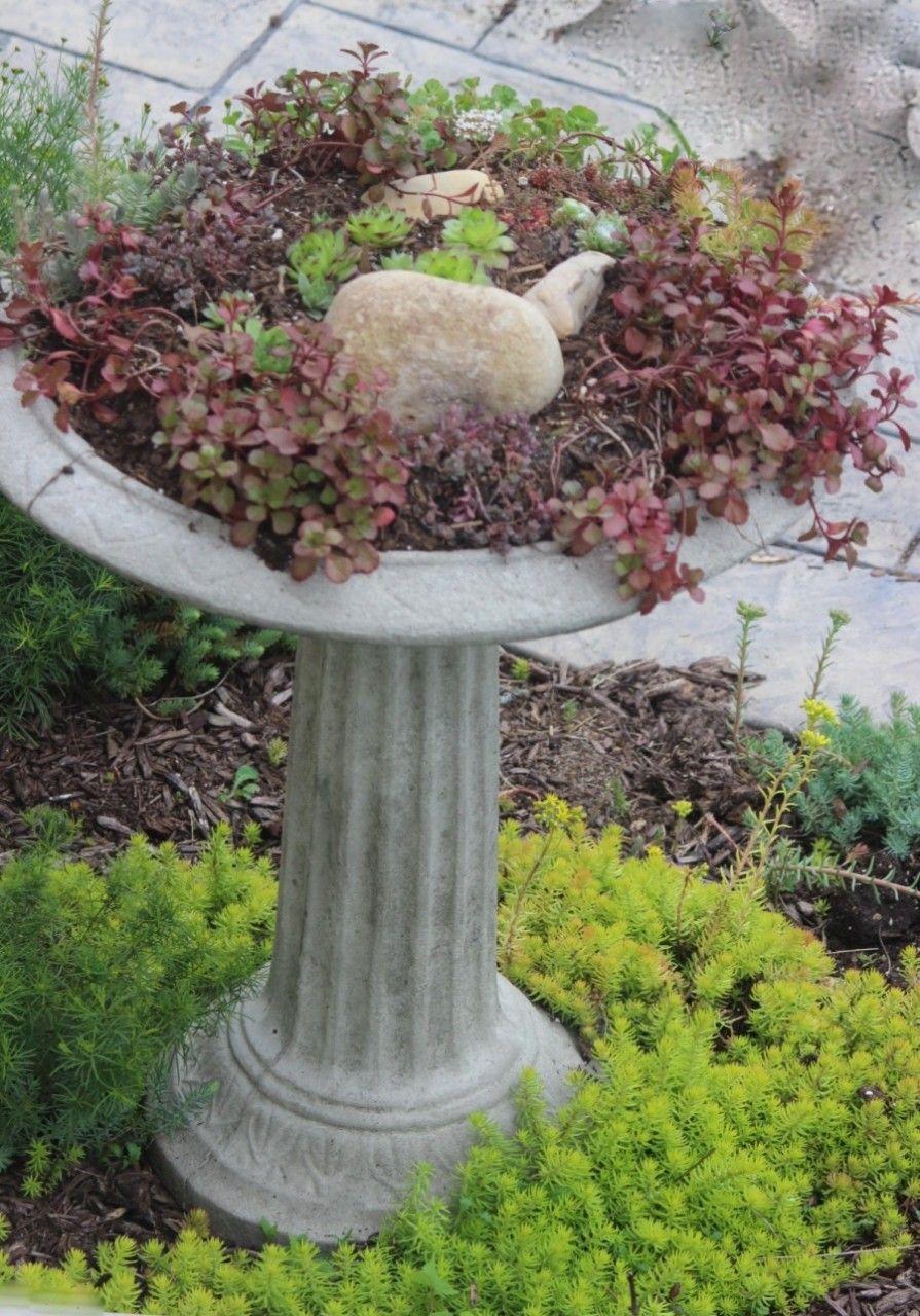 My Succulent Bird Bath