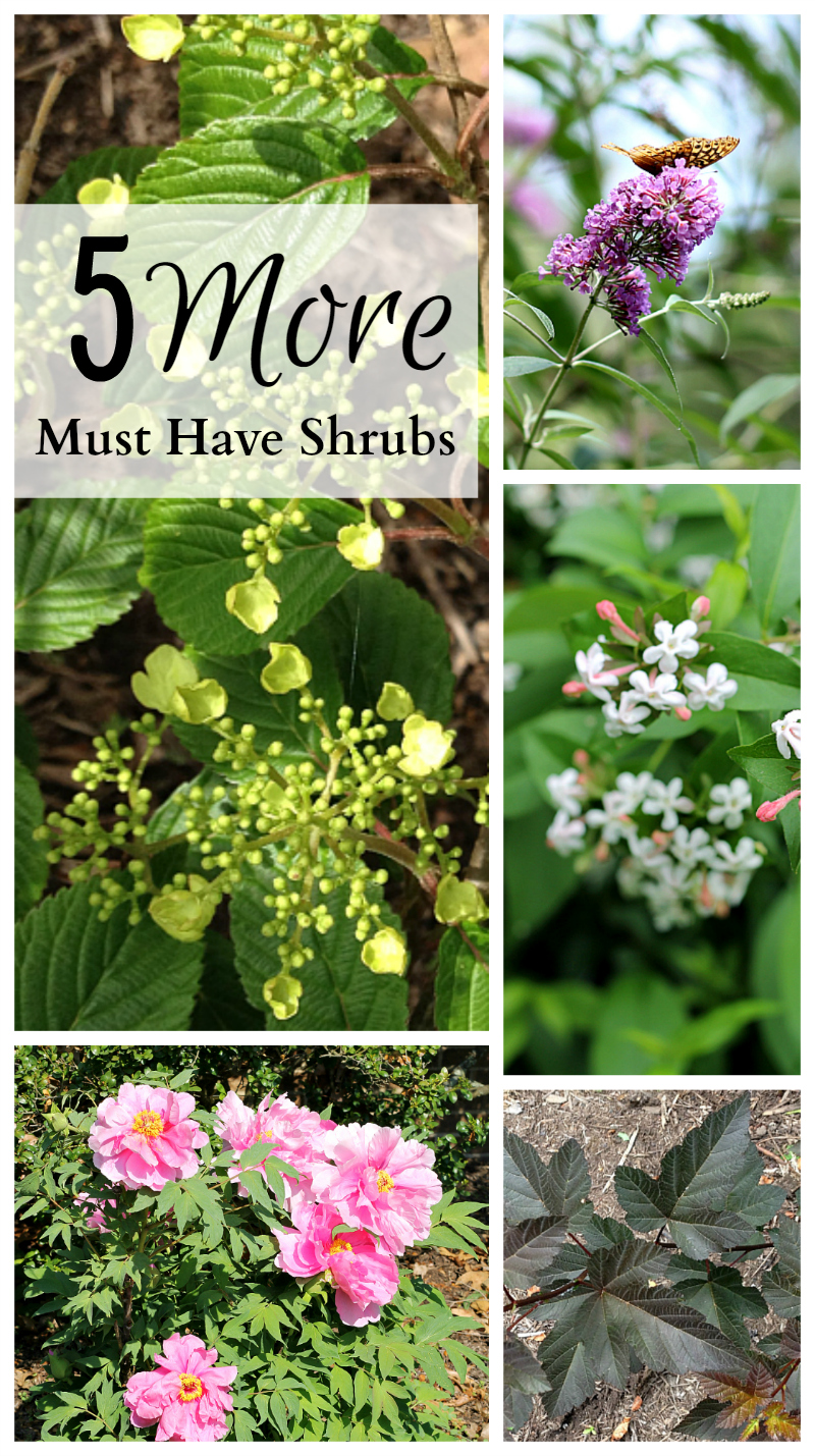 Must have shrubs collage