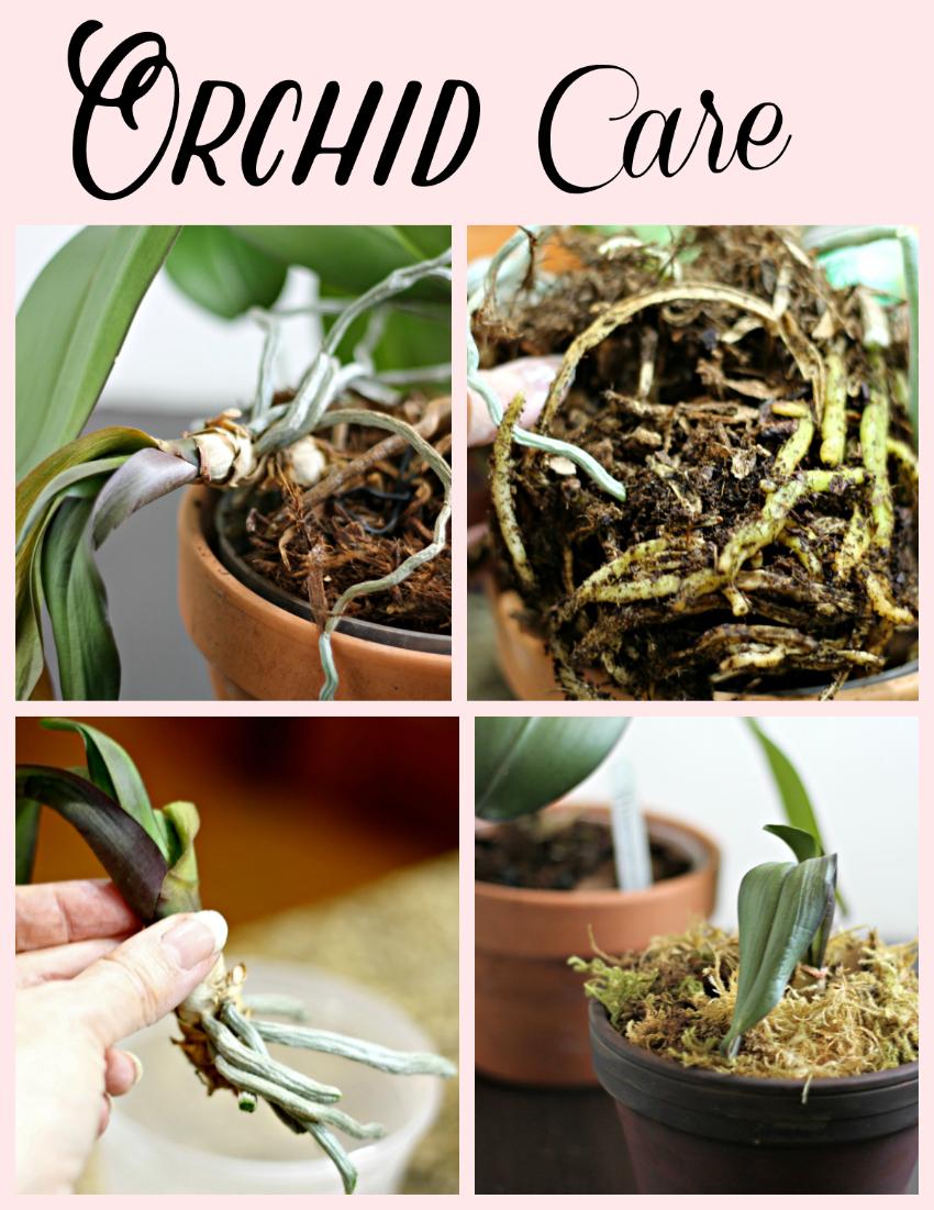 Orchid Care ~ gardenmatter.com
