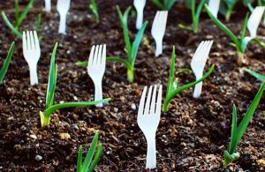 Place-Plastic-Forks-in-the-Soil-to-Prevent-Animals-from-Getting-into-Your-Garden