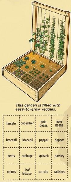 Plant-a-compact-vegetable-garden