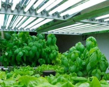 Plants-Under-Fluorescent-Lights-600x361
