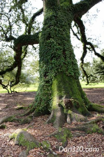 Roots copy