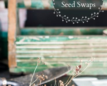 seed-libraries-seed-saving-seed-swaps