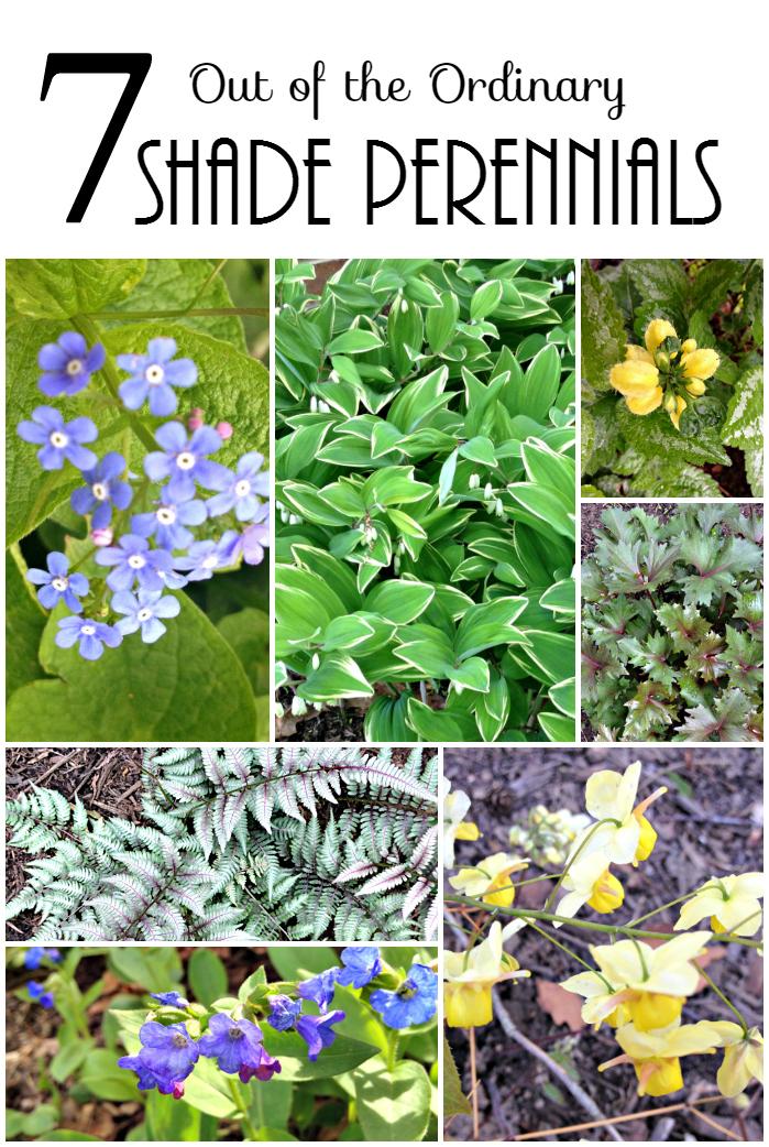 Shade Perennials tall ~gardenmatter.com