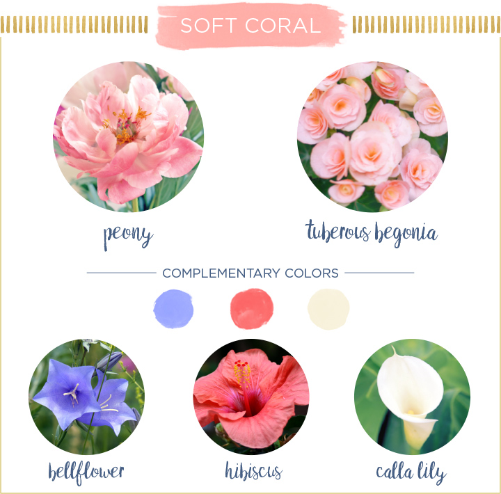 Soft-Coral-Summer-Flowers