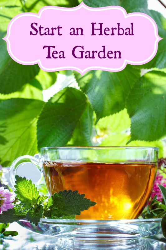Start-an-Herbal-Tea-Garden