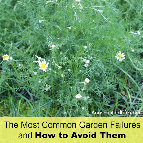 The-Most-Common-Garden-Failures-and-How-to-Avoid-Them