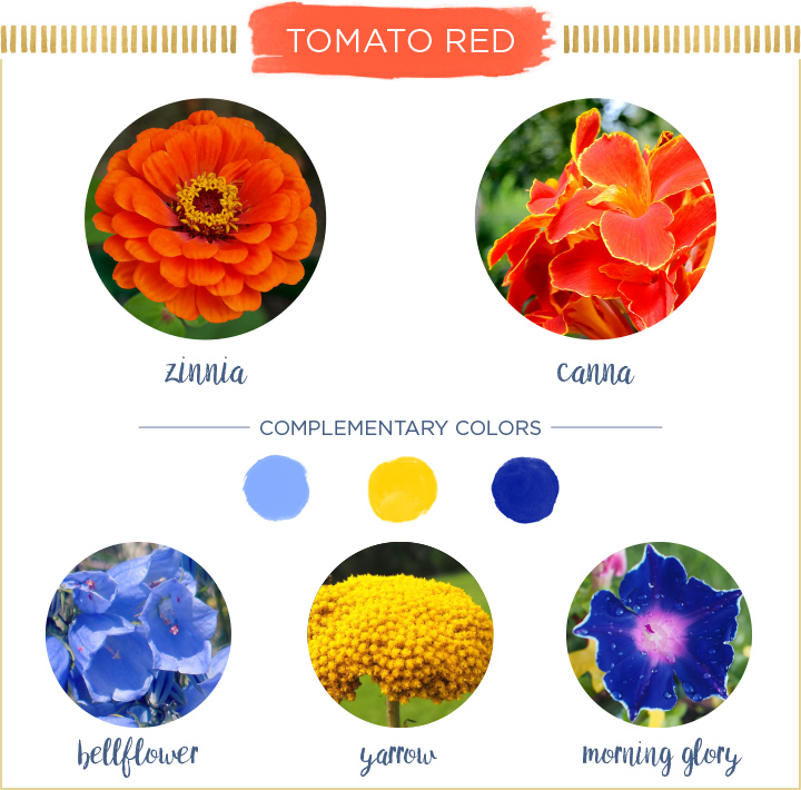 Tomato-Red-Summer-Flowers