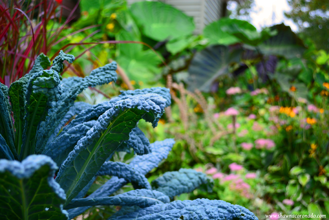 Tropical jungle garden dinosaur kale