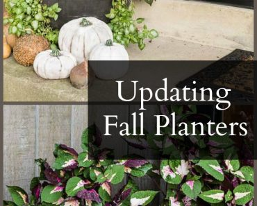 updating-fall-planters