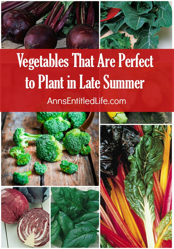 Vegetables-that-are-perfect-to-plant-in-late-summer